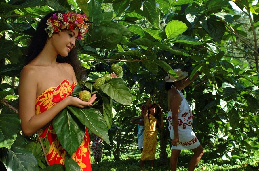 Morinda citrifolia - čudežna rastlina iz Francoske Polinezije