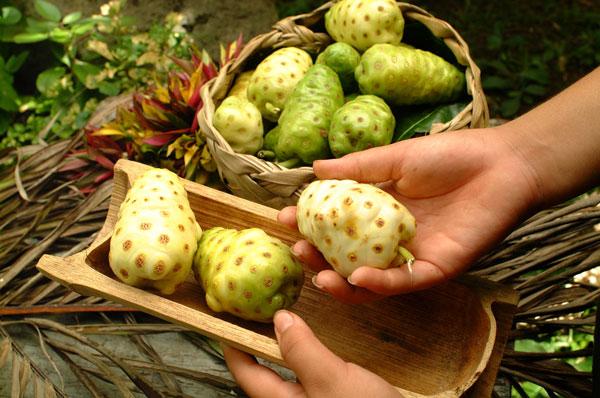 Zrel sadež noni v roki